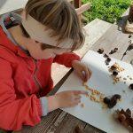 Učenka pri izdelavi slike uporablja kostanj in koruzo